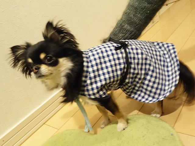 小型犬マント